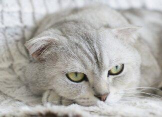 jakiego zapachu nie lubią koty